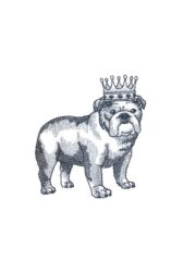 English Bulldog Crowned